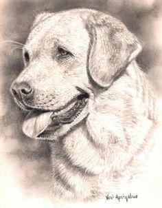 Labrador Head Study by Steve Vicary  Dogs  Pinterest  Estudio y