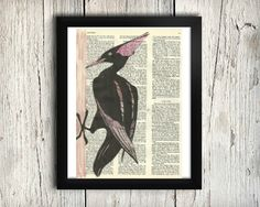 Pileated Woodpecker - Decorative Art Print,Vintage posters,Drawing,print,poster,digital,wall decor,Gifts,Decorative Arts,illustration,Home