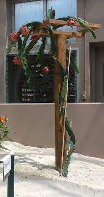 Dragon Fruit Support structure, arbor, trellis, pitahaya ...
