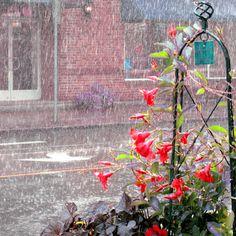 rain, rain, rain, rain  and more rain