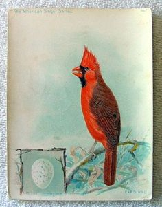 VINTAGE-SINGER-SEWING-MACHINE-TRADE-CARD-NO-7-AMERICAN-SINGER-SERIES-CARDINAL-d