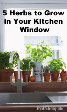 Herbs to Grow in Your Kitchen Window. 5 Herbs to Grow in Your Kitchen Window. Herb Garden Design, Diy Herb Garden, Container Gardening, Gardening Tips, Indoor Gardening, Organic Gardening, Kitchen Plants, Kitchen Decor, Kitchen Ideas