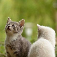 @turnkeypets  #cutekittens #kittens #cats #catlovers #catlover #animalphotography