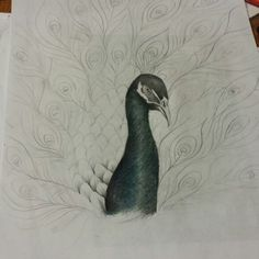 Peacock in progress