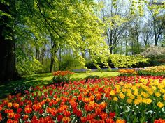 photo paysage de printemps