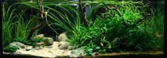 Aquarium Industries - Tissue Culture Plants Care Sheets