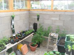 AquaPonics in Austria - Pit Greenhouse / Rocket Mass Heater