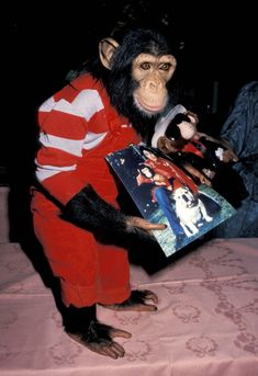 Michael Jackson's pet chimpanzee Bubbles at the Annual Amanda Foundation Celebrity Fashion. Elizabeth Taylor Michael Jackson, Michael Jackson And Bubbles, Michael Jackson Pics, The Jackson Five, Jackson Family, Icarly, Pet Monkey, King Of Music, Primates