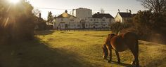 New Forest Hotel | Cloud Hotel Brockenhurst in the heart of the New Forest