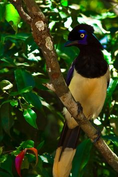 Hotel Bee - Travel tips and Travel Guides Rainforest Animals, Iguazu Falls, South America Travel, Exotic Birds, Fauna, World Cultures, Central America, Sea Creatures, Beautiful Birds