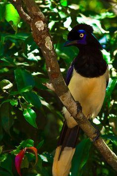 Iguazu park - Argentina