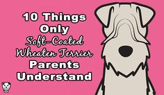 Your Soft-Coated Wheaten Terrier changed your life the day you brought them home. There's some things only your fellow Wheatie parents understand: