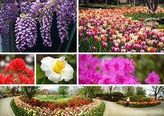 April 2014, Spring Blooms, What's in Bloom, The Dallas Arboretum, Gardens, Blooms