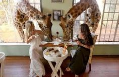 Giraffe Manor south-african-lodges.com - Google Search
