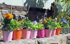Party favors-plants in buckets w suckers