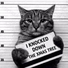 cat xmas tree.jpg.838x0_q67.jpg (650×650)