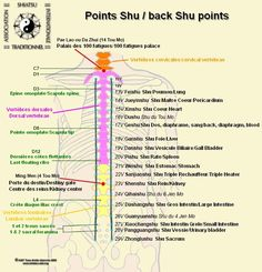 Acupuncture points and meridians - Acupoints & meridians