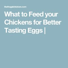 What to Feed your Chickens for Better Tasting Eggs |