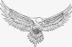 Vector sketch eagle, Sketch, Eagle, Hand Painted PNG and Vector