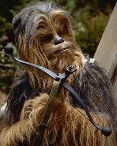 Chewbacca, Star Wars, Stars, Dogs, Animals, Animaux, Sterne, Doggies, Starwars