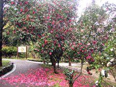 Kurume Garden