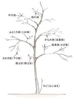 植栽について | 浜松のエクステリア・外構なら都田建設