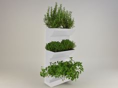 Indoor Herb walls a solution to grow herbs in tidied and spectacular conditions in your kitchen or at your garden. Using fresh and living herbs not only good for healthy and tasty foods but for healthcare and home cosmetics, like facemask or herbal teas. http://goo.gl/3kD2Rp Details: white frame white table white plant's box 45×60 cm / 17,7×23,6 inches easy to fit water holder system