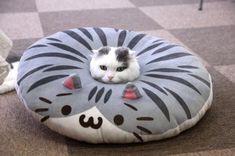 Endlich! Für Katzenliebhaber, die keine Katzen halten dürfen: die aufblasbare Katze. Passt sich jeder Wohnung an!