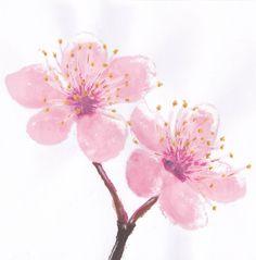 Cherry blossom by Saili-chan.deviantart.com