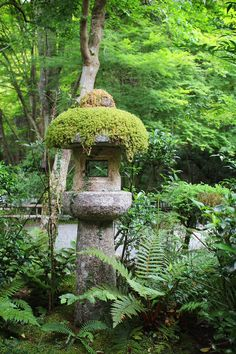 苔むす石灯籠、高山寺、京都 Mossy Stone Lantern, Kozanji, Kyoto                                                                                                                                                                                 More