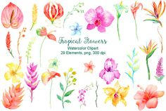 Watercolor Clipart tropical collection instant by CornerCroft