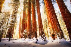 Sequoia National Park - Califórnia, Estados Unidos