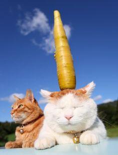 黄色人参、きいろにんじん:yellow carrot