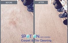 Our Gold Coast service could restore your carpet back to its original condition. Using a hot water extraction method to clean and sanitise. Red Wine Stains, Carpet Cleaners, Carpet Tiles, How To Clean Carpet, Gold Coast, Restore, Rust, Restoration, Blood