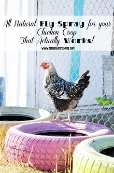 Homemade, All Natural fly spray for your chicken coop that actually works and…