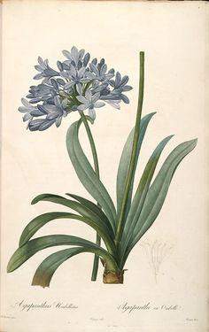 L'Impératrice Joséphine et la Botanique - Le petit carnet de Maxence