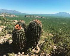 Los paisajes de Baja California Sur te quitarán el aliento. #paisaje #landscape #nature #mulege #bajacaliforniasur #visitbajasur