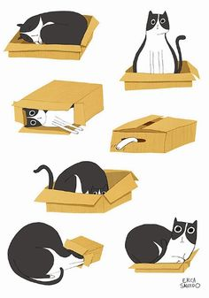 A cat and a box