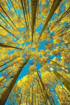 Chiunque sia qualcuno vuol essere un albero – / o cavalcarne uno, i capelli spumati dal vento. - Rita Dove