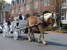 Charlotte Center City Carriage tours provides Horse and Carriage rides through Uptown Charlotte and the historic fourth ward.