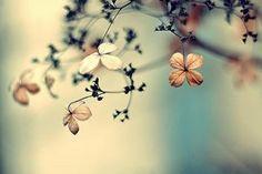 As coisas boas se escondem nas simplicidades.  Não busque o melhor, busque o mais leve.