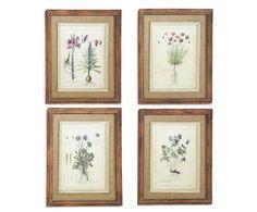 4 gravures encadrées fleur, bois - 43*53