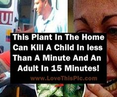 WARNING: This Common House Plant Can Kill A Child In Less Than A Few Minutes