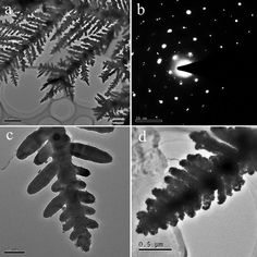 Low-magnification TEM image of a typical Ag dendrite || credit goes to Xia Qin, Zhiying Miao, Yuxin Fang, Di Zhang, Jia Ma, Lu Zhang, Qiang Chen, and Xueguang Shao || Preparation of Dendritic Nanostructures of Silver and Their Characterization for Electroreduction