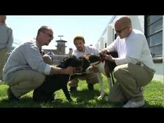 Puppies on Parole in State Prison - YouTube