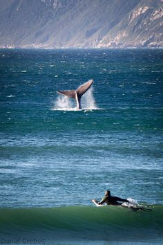 """""""A whales tail is a tale to tell"""""""