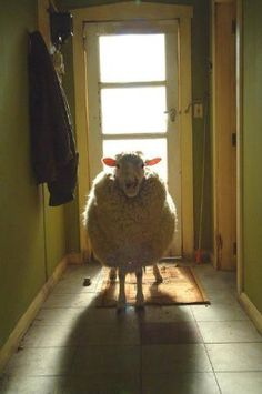 I wanna sheep !!