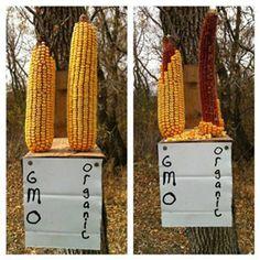 What Do Squirrels Think Of GMOs? - Food Revolution Network Blog