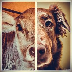 Please be their voice. Please don't finance heartbreaking violent animal cruelty. Know the truth. Please help me save the Animals