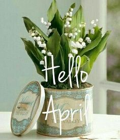 Hello April Spring Months, Days And Months, Months In A Year, Spring Time, April Images, April April, Hello March, Wall E, New Month